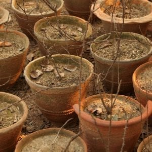 potted plants in drought
